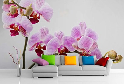 Fototapeta Orchid  bloom 24831