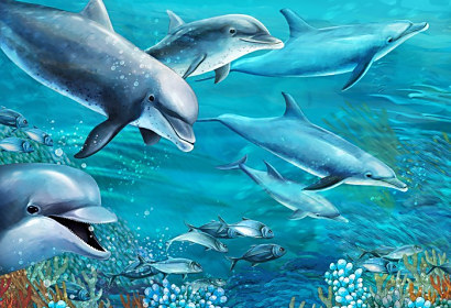 Fototapeta Dolphins Coral reef ft-51246784