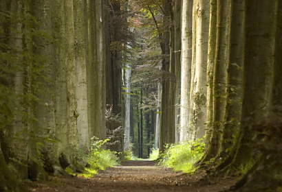 Fototapeta Nature pathway forest ft-932032